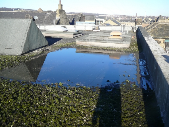 ponding and moss growth to flat roof