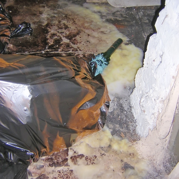damp timbers cause outbreak of dry rot